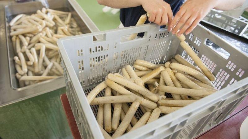 Depuis 2015, 94% du soja importé provient de la culture durable,Depuis 2015, 94% du soja importé provient de la culture durable.