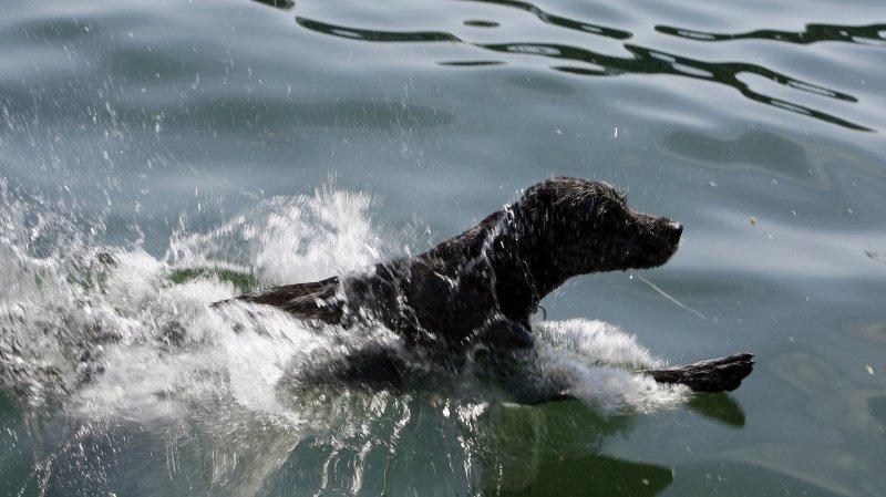 Neuchâtel: plusieurs chiens morts par empoisonnement obligent la fermeture de plages