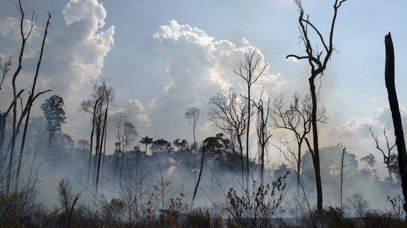 Brésil: augmentation de 28% des incendies en Amazonie