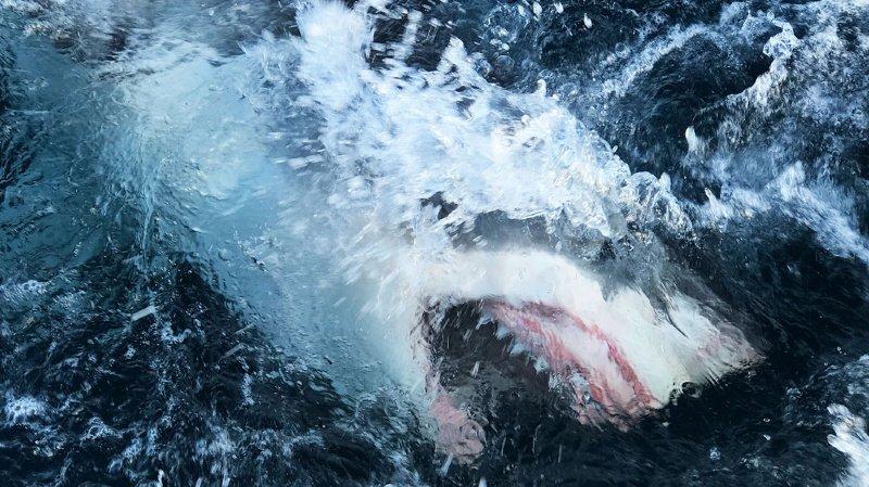 Insolite: un Australien frappe un requin pour sauver sa femme