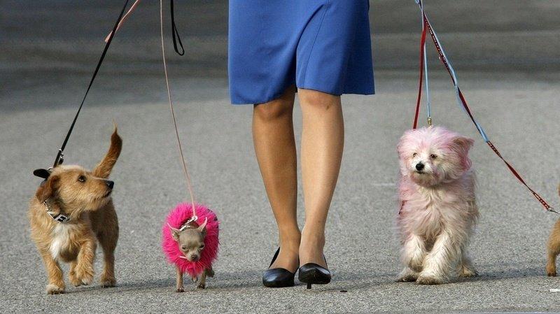 La loi exige que les propriétaires de chiens les promènent deux fois par jour au minimum (illustration).