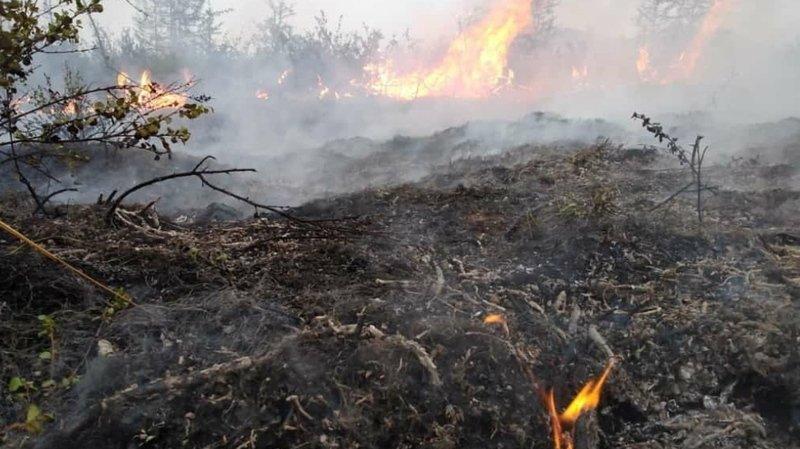 Les incendies dans les forêts de Sibérie se poursuivent, mais ils ont un peu diminué.