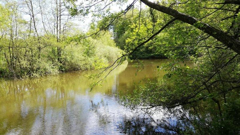 Le marais des Monod, un trésor caché dans les bois