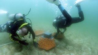 Hong Kong: des chercheurs utilisent l'impression 3D pour restaurer des récifs de coraux