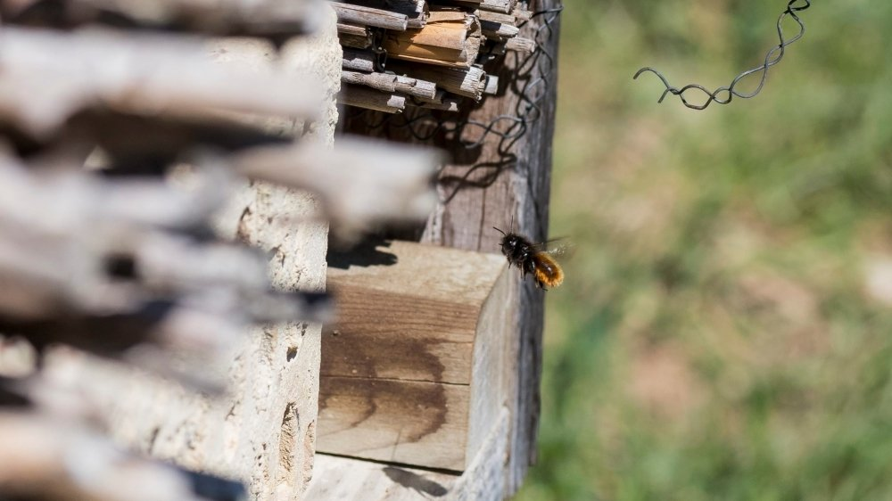 La motion demande à ce que le Conseil fédéral définisse des mesures à prendre pour combattre la disparition des insectes et indique quelles ressources il envisage de consacrer à ce but.