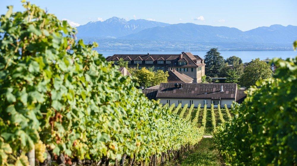 Malgré la qualité des vins, la Sàrl du Domaine de la Ville de Morges, créée en 2013, a toujours eu de la peine à atteindre la rentabilité.