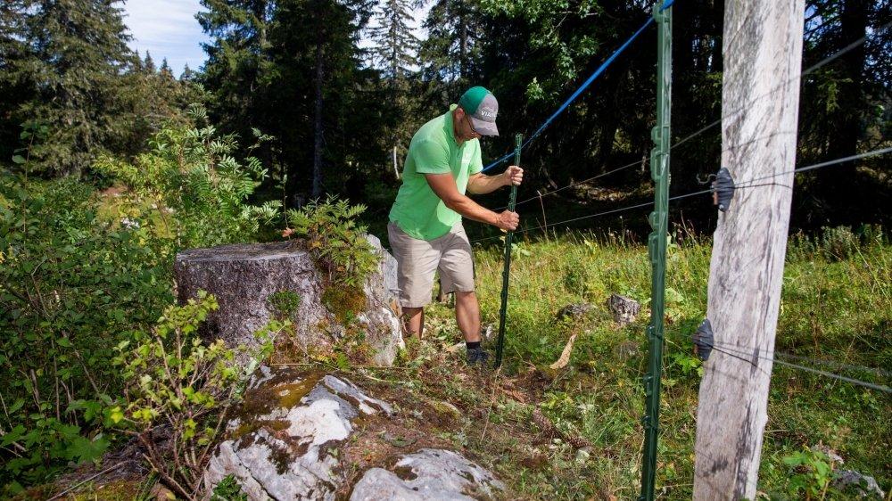 L'éleveur Guy Humbert en plein travail. La clôture est composée de cinq fils, afin d'offrir une protection optimale.