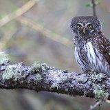 Balade ornithologique sur le sentier des oiseaux