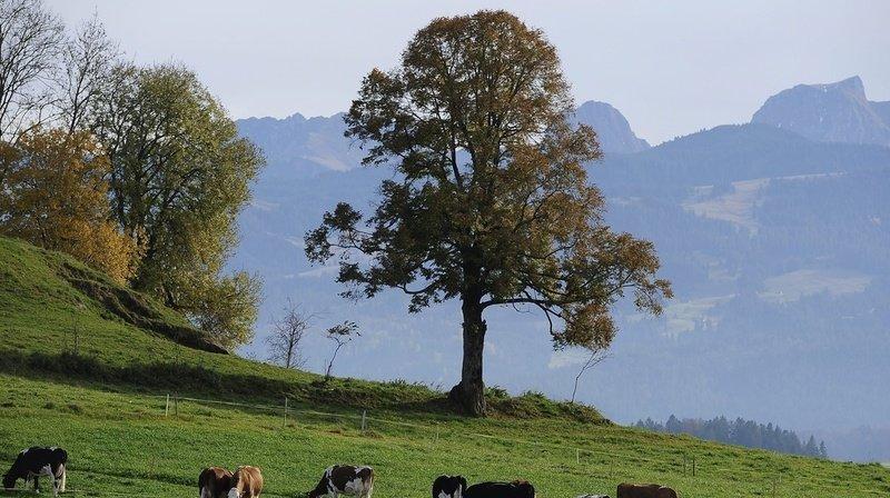 Berne: un alpiniste perd la vie dans la région du Gantrisch
