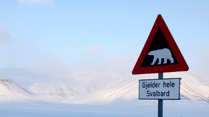 Arctique: un homme tué par un ours polaire sur un archipel norvégien