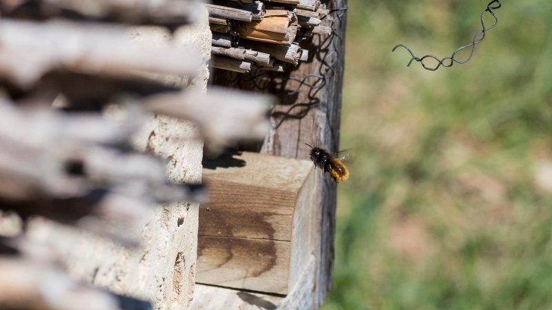 Biodiversité: les élus au secours des insectes