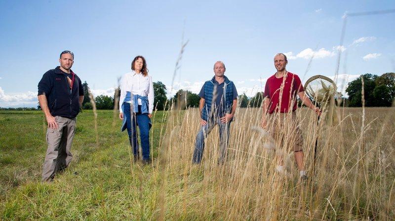 Biodiversité: le peuple de l'herbe revient vite dans les prairies restaurées