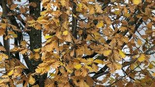 Changement de saison: l'automne commence le 22septembre cette année