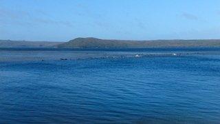 Australie: des centaines de cétacés échoués dans une baie de Tasmanie sont morts