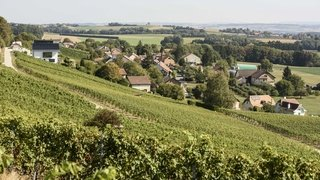 Vaud accorde 1,3million supplémentaire au secteur vitivinicole